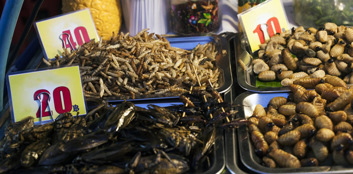 Emerging food allergy: Edible insects